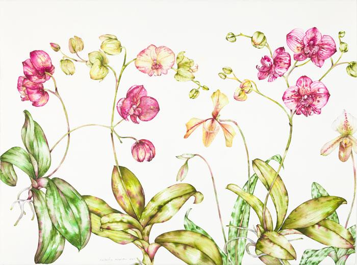 Slippers Amongst the Phalaenopsis