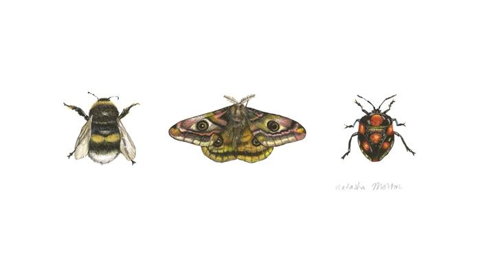 Emperor Moth by Natasha Morton