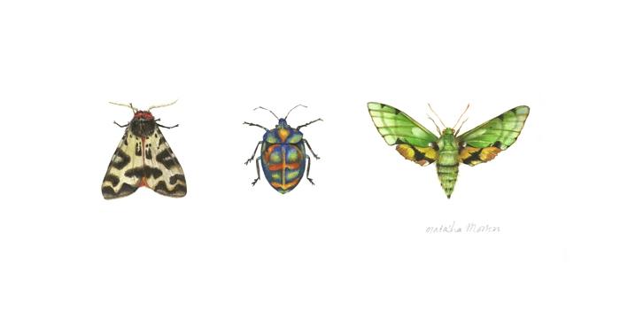 Tiger Moth by Natasha Morton